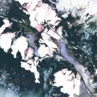 Magnolias sobre el agua